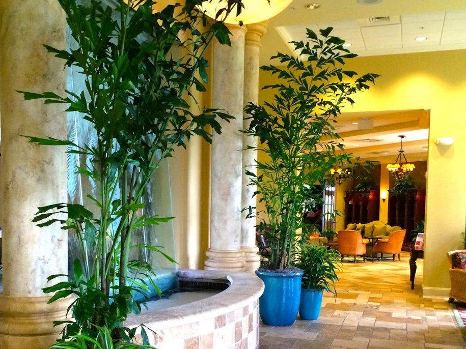Country Club Plant Scapes