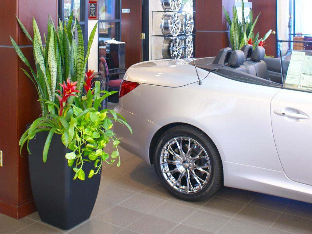 Car Dealership Plant Scapes