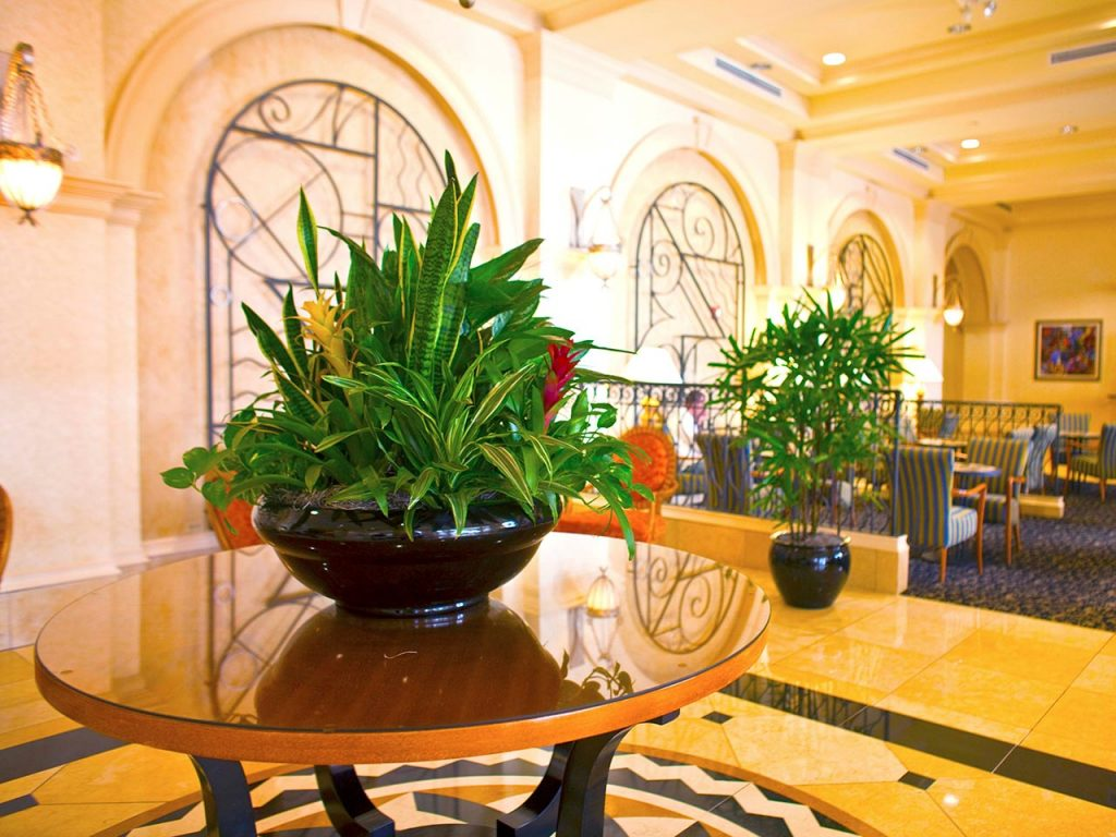 Hotel & Resort Plant Scapes