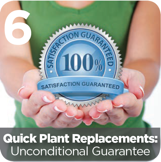 Quick Plant Replacements